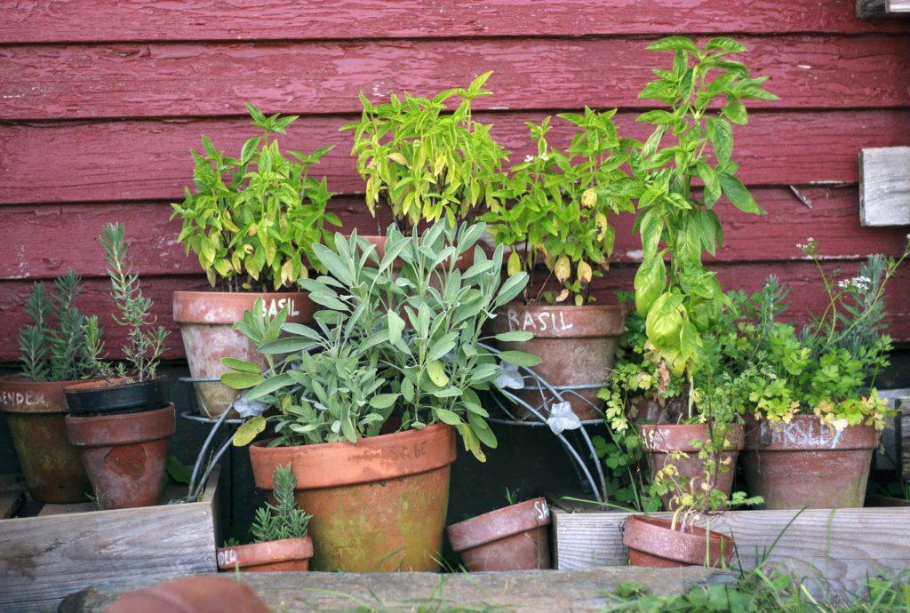 Quelles plantes choisir pour démarrer ton jardin médicinal ?