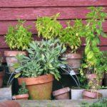 Où acheter des plantes et des huiles essentielles bio de qualité ? L'annuaire des petits producteurs