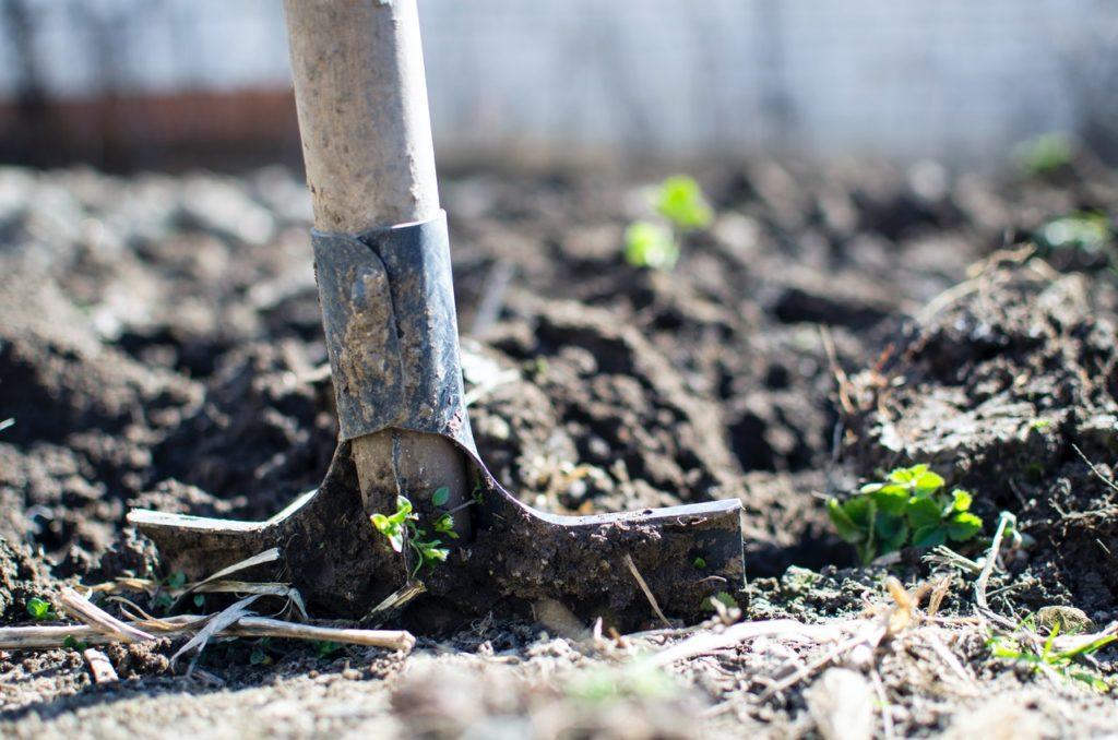Comment créer facilement ton propre jardin médicinal ?