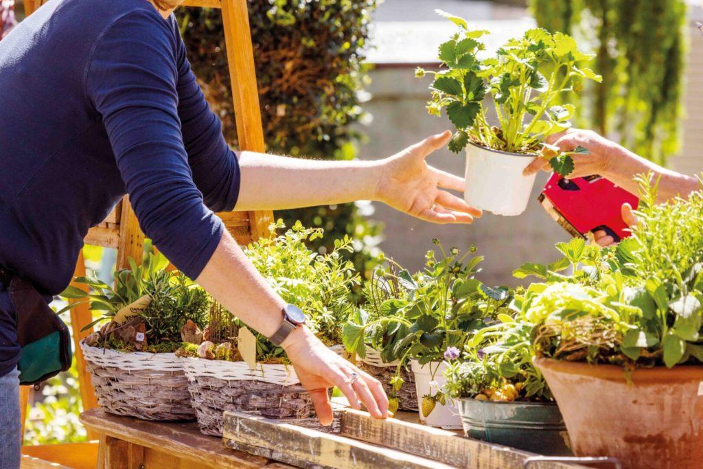 Comment pratiquer une herboristerie plus locale, écologique et durable ?