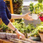 Comment devenir herboriste professionnel : la liste des métiers
